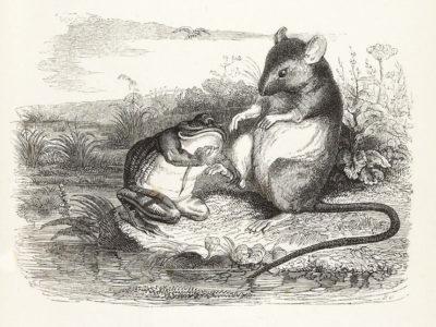 La Grenouille et Le Rat